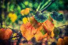 Autumn Leaves        (ED) by Raymond Warren