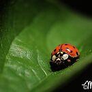 Chiaroscuro by milkayphoto