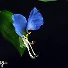 Wild Blue by milkayphoto