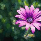 Pink Daisy     (CM) by Ray Warren