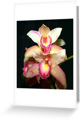 Heavenly Orchids by vette
