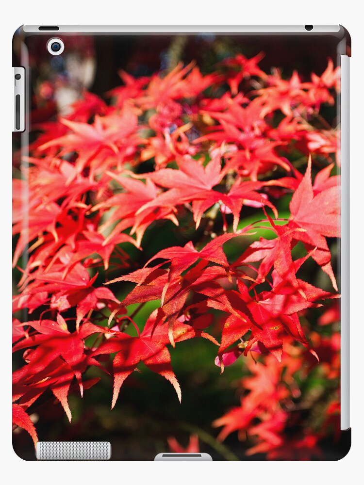 Bright red Acer tree leaves by Martyn Franklin