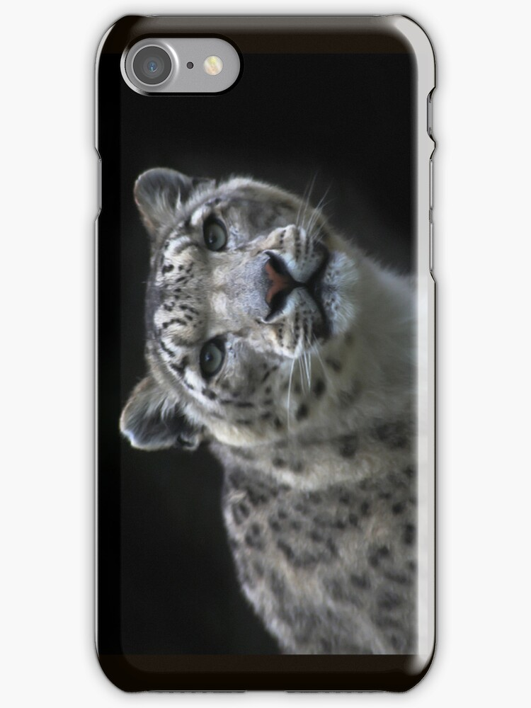 """"""" Watchful Eyes """" Snow Leopard iPhone Case  by Love Through The Lens"""