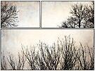 Tree Tops by KBritt