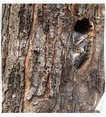 Barking Up The Right Tree/ Screech Owl Poster