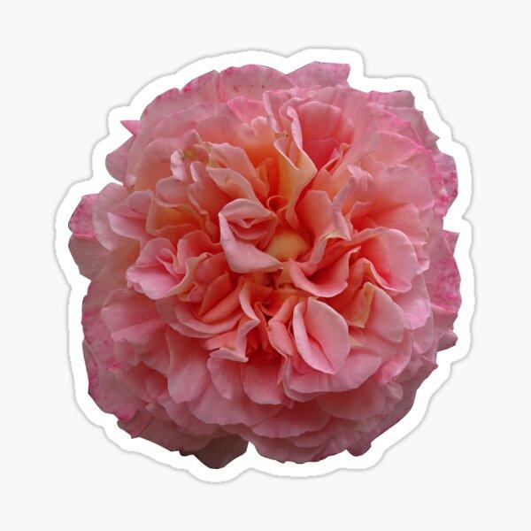 rosegarden Sticker