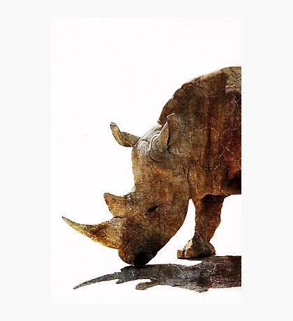 The Old Rhino Photographic Print