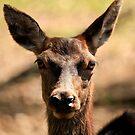 Lyell Deer Farm - Red Deer  by Sea-Change
