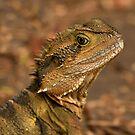 Currumbin Wildlife Sanctuary - Water Dragon  by Sea-Change