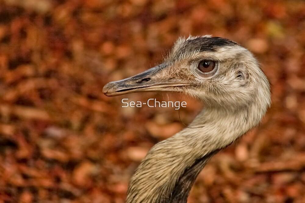 Alma Park Zoo - Rhea  by Sea-Change