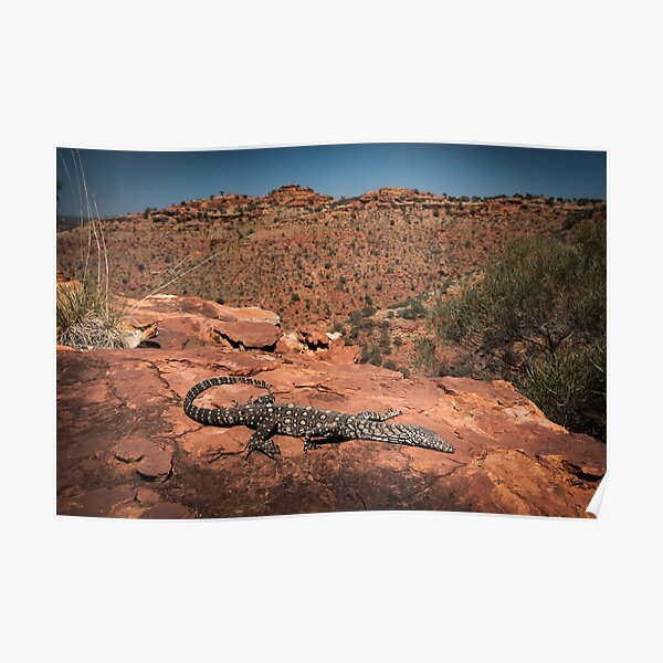 Perentie - Kings Canyon, NT Poster