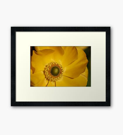 Centre of a ranuculus Framed Print