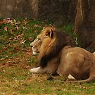 NC Zoo by Penny Fawver