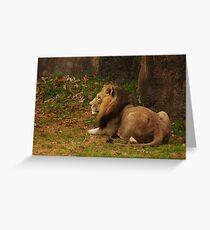 NC Zoo Greeting Card