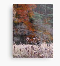 Nature's soft furnishings Metal Print
