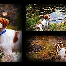 """""""Remington in the Bush"""" by Fotography by Felisa ~"""