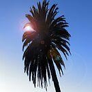 Palm Tree by NuclearJawa
