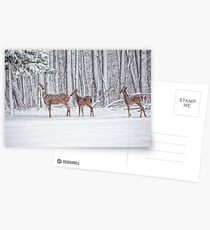 Winter Visit Postcards