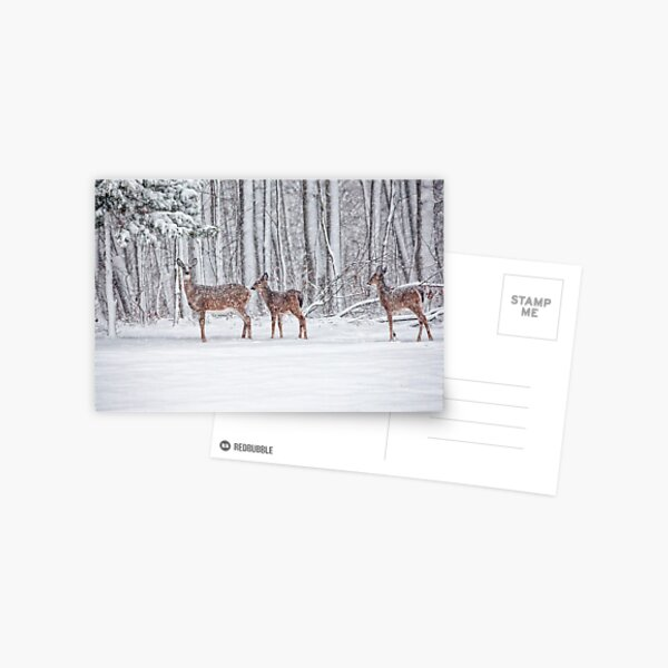 Winter Visit Postcard