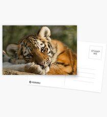 Sleepy Little Girl Postcards