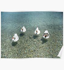 Lipsi Greek Island geese Poster