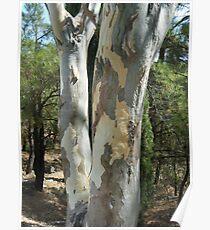 Greek Island Tree Poster