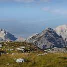 Dolomite mountainside dairy cow pano by David Galson