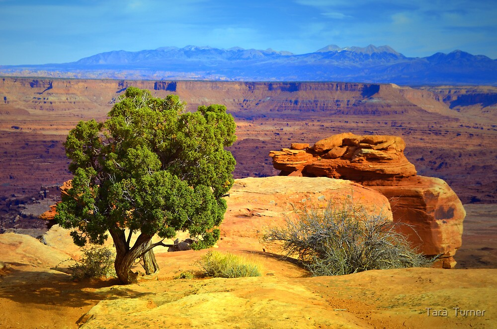 The Tree, The Canyon, The Sky by Tara  Turner