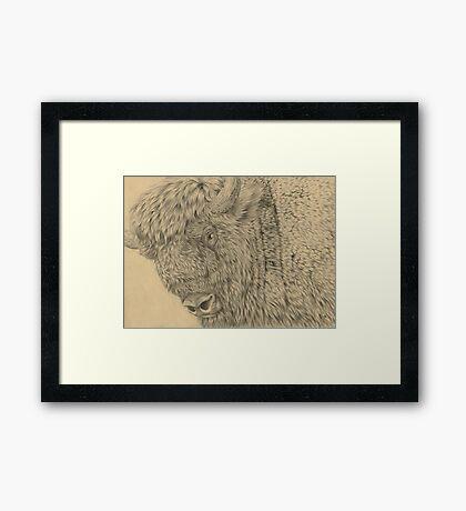 Wisent II (European Bison) Framed Print
