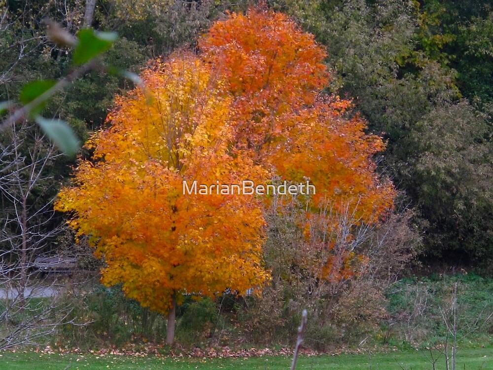 Last Orange by MarianBendeth