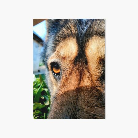 The head of a wolf dog photographed up close, detailed eyes Art Board Print