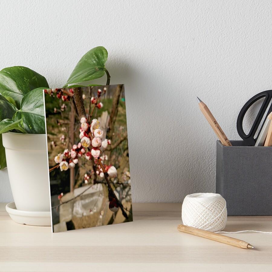 Flowering tree in spring, light pink flowers on the branch Art Board Print