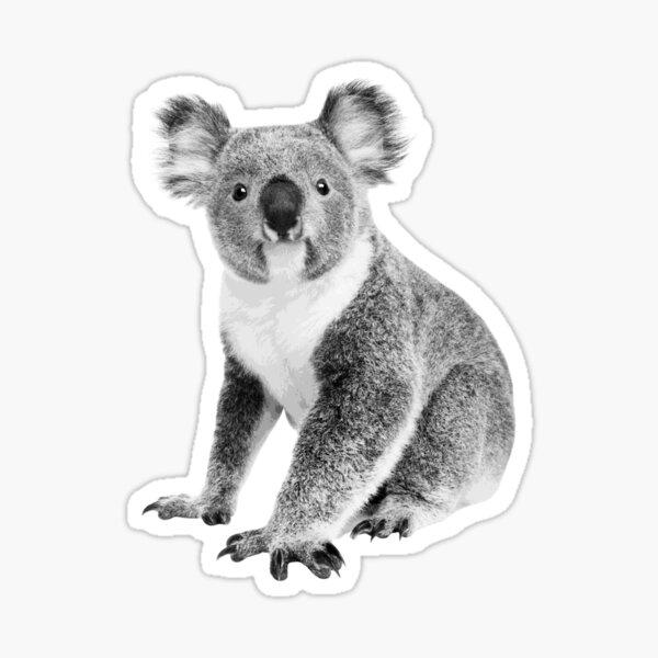 Cute Koala Portrait Black and White Australian Wildlife Aussie Gift Idea Sticker