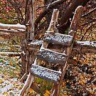 Josie's Ladder by Kim Barton