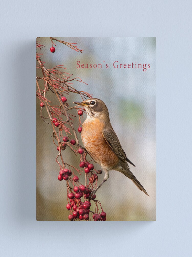 Alternate view of Robin and Red Berries Canvas Print