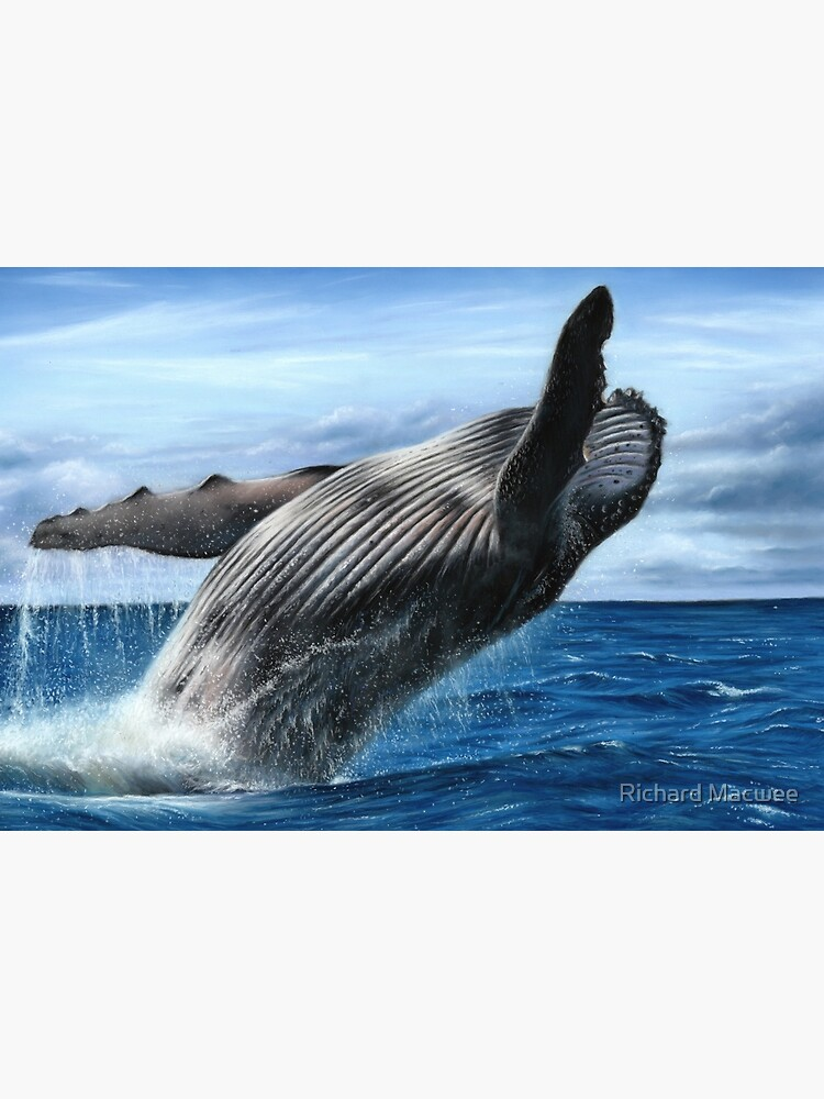 Humpback Whale Artwork by richardmacwee