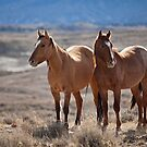Wild Horses of Sand Wash Basin by Kim Barton