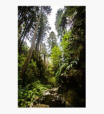 Giants Stand, Giants Roamed Photographic Print