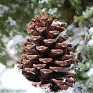 The Pine Cone by Grinch/R. Pross