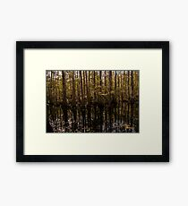 Cypress Swamp Framed Print