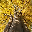 Autumn Towers by Daniel Jarvis wildlife and nature photography