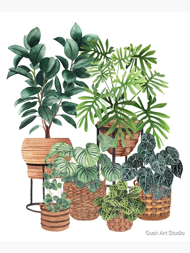 Potted Plants Collection 3 by gusstvaraonica