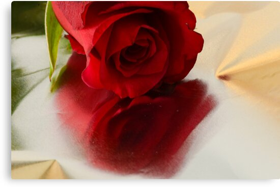 Red rose on silver by Nicole W.