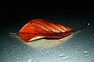 Leaf by Nigel Bangert