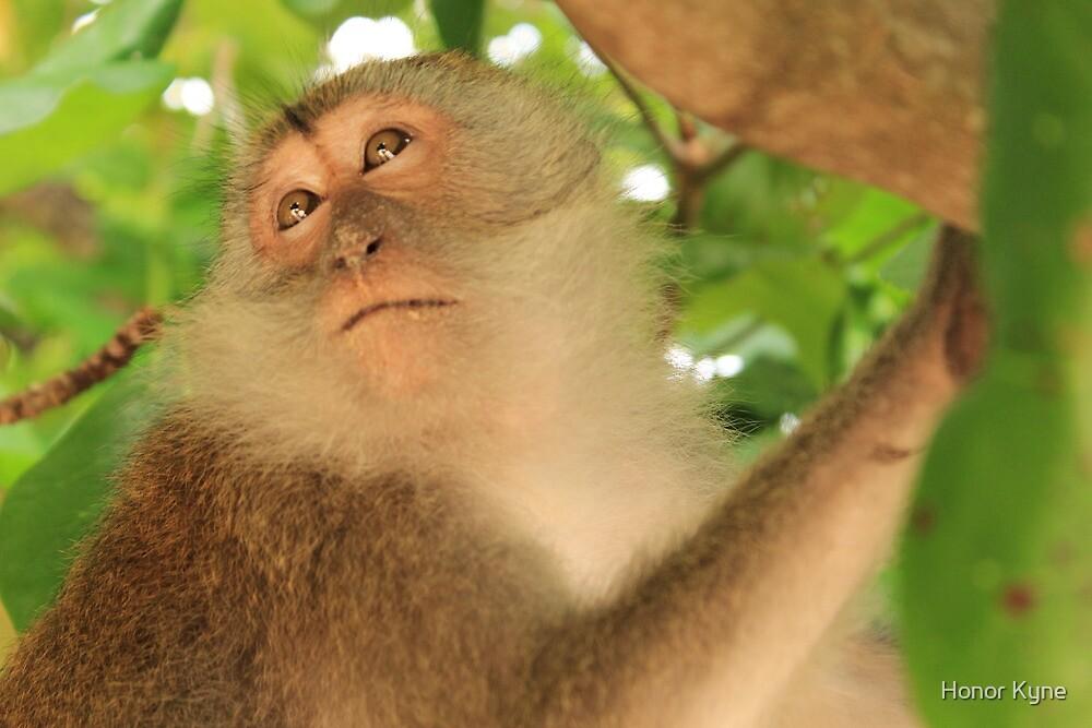Wild Macaque Monkey - Phra Nang Beach - Railay, Thailand by Honor Kyne