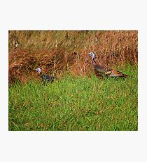 Geeky Gobblers Photographic Print
