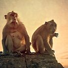 Uluwatu Monkeys  by Jayme Rutherford