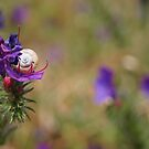 Snail In A Flower by CollinScott