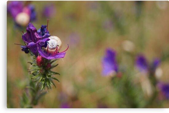 Snail In A Flower by CollinScott
