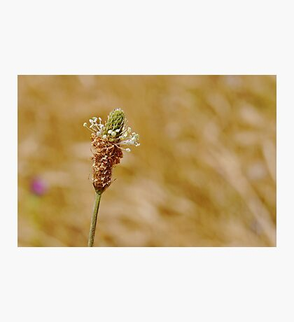 Beauty In Weeds Photographic Print
